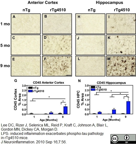 CD45 Antibody | YW62.3 gallery image 1