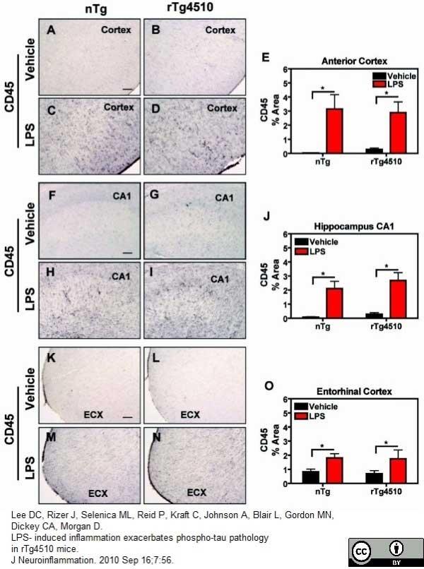 CD45 Antibody | YW62.3 gallery image 3
