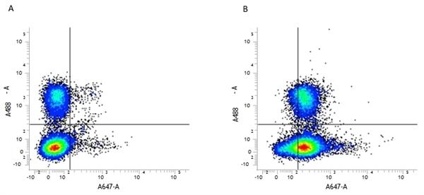CD45 Antibody | YW62.3 gallery image 4