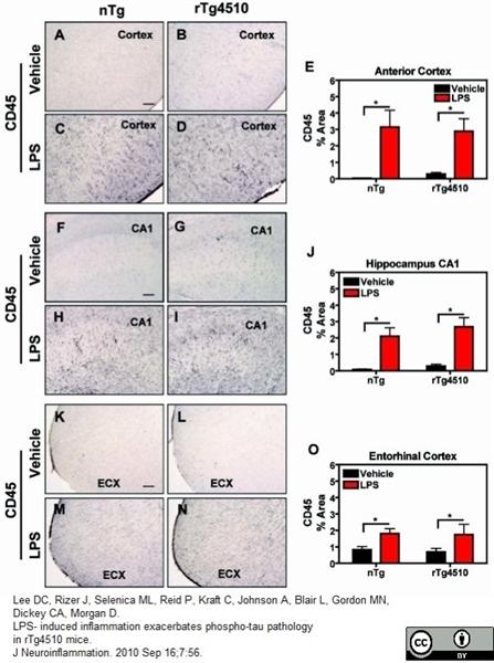 CD45 Antibody | YW62.3 gallery image 2