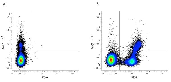 CD45R Antibody | RA3-6B2 gallery image 1
