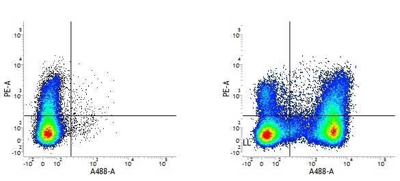 CD45R Antibody | RA3-6B2 gallery image 4