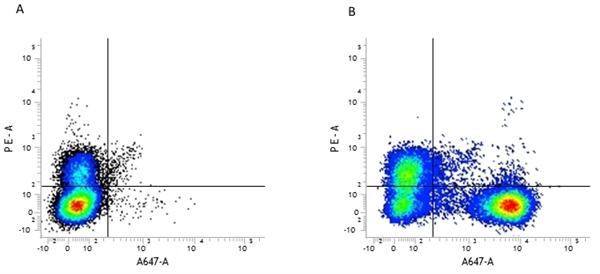 CD45R Antibody | RA3-6B2 gallery image 2