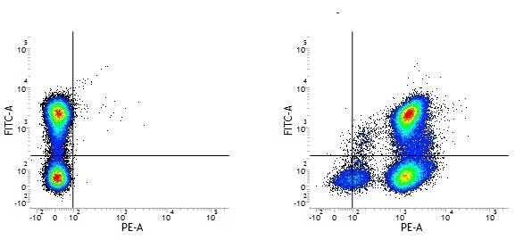 CD48 Antibody | OX-78 gallery image 1