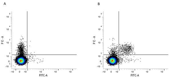 CD49b Antibody | DX5 gallery image 2