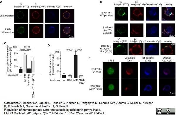 CD49e Antibody | HM alpha 5 gallery image 3