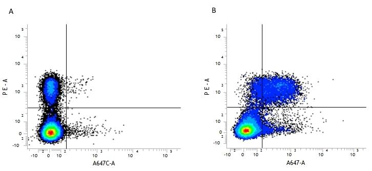 CD5 Antibody | YTS 121.5.2 gallery image 1
