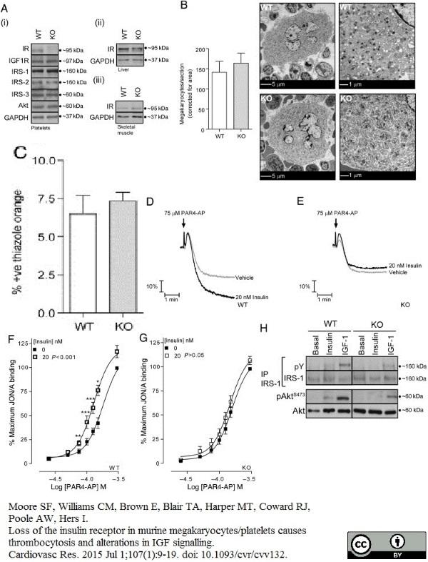 CD61 Antibody | HM beta 3.1 gallery image 7