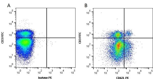 CD62L Antibody | MEL-14 gallery image 1