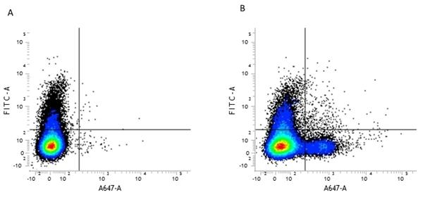 CD79b Antibody | HM79-11 gallery image 1