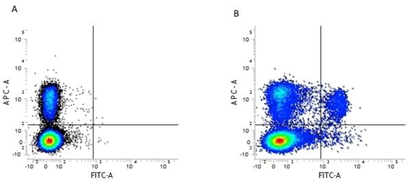 CD8 Alpha Antibody | 53-6.7 gallery image 2