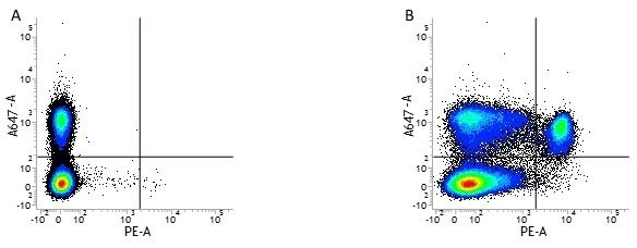 CD8 Alpha Antibody | 53-6.7 gallery image 1