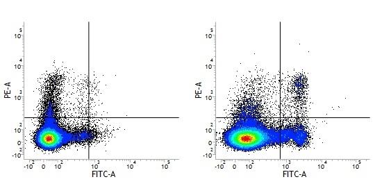 CD8 Alpha Antibody | 53-6.7 gallery image 3