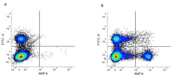 CD8 Alpha Antibody | KT15 gallery image 1