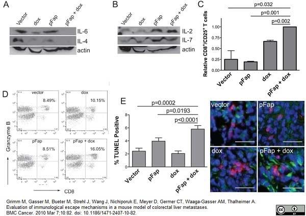 CD8 Alpha Antibody | KT15 gallery image 6