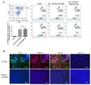CD8 Alpha Antibody | YTS105.18 thumbnail image 6