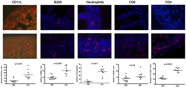 CD8 Alpha Antibody | YTS105.18 gallery image 3