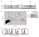 CD81 Antibody | Eat2 thumbnail image 6