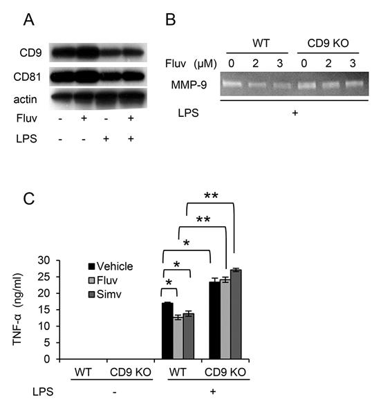 CD81 Antibody | Eat2 gallery image 7
