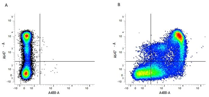CD9 Antibody | MF1 gallery image 1