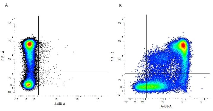 CD9 Antibody | MF1 thumbnail image 2