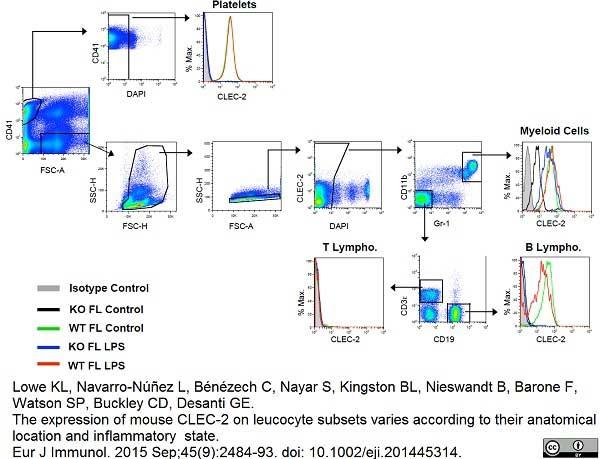 CLEC2 Antibody   17D9 gallery image 3