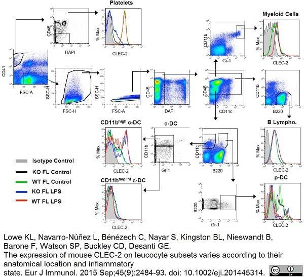 CLEC2 Antibody   17D9 gallery image 4