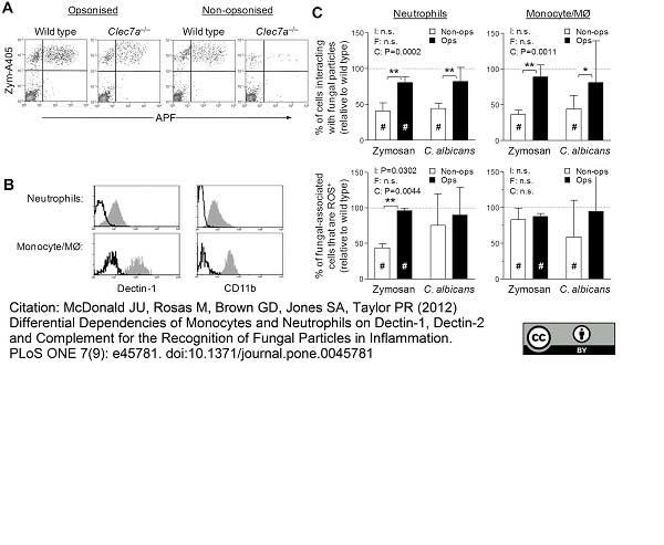 Dectin-1 Antibody | 2A11 gallery image 11