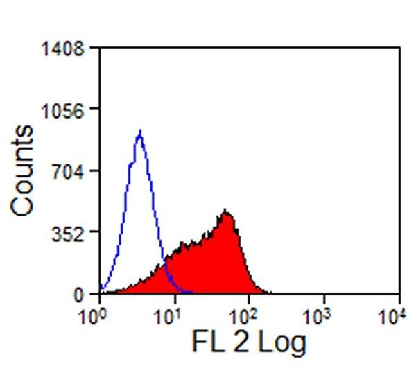 Delta-Like Protein 4 Antibody | HMD4-2 gallery image 2