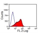 Delta-Like Protein 4 Antibody | HMD4-2 thumbnail image 2