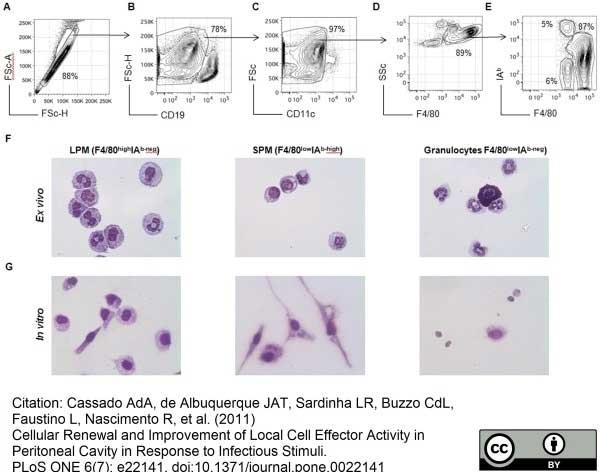 F4/80 Antibody | Cl:A3-1 gallery image 9
