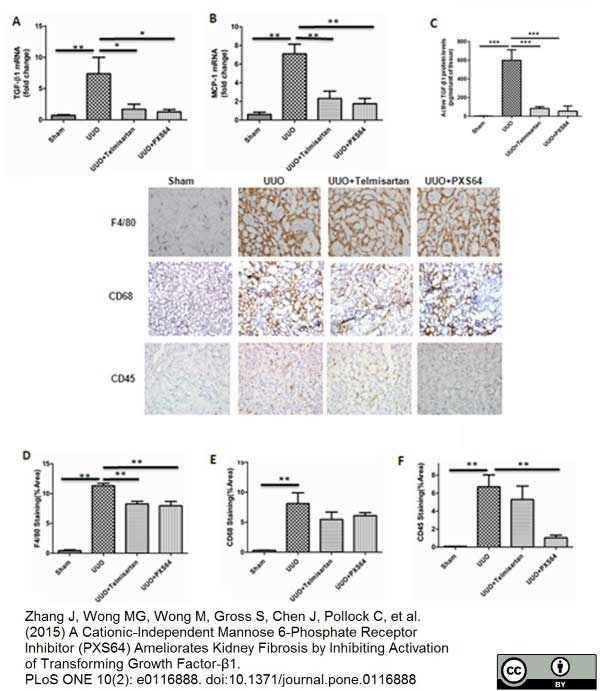 F4/80 Antibody | Cl:A3-1 gallery image 27