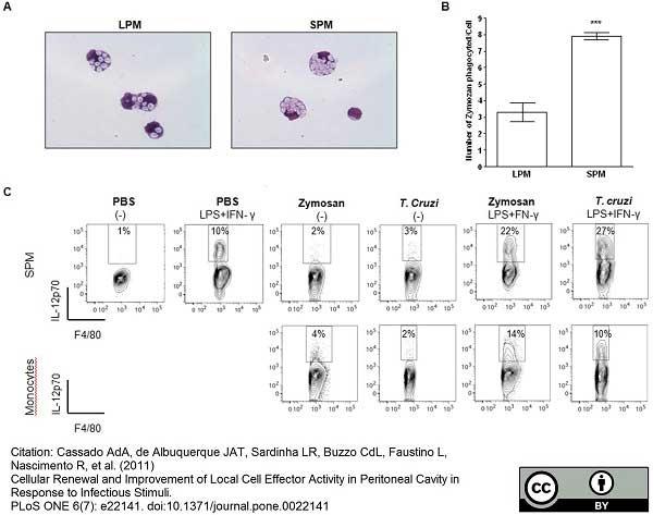 F4/80 Antibody | Cl:A3-1 gallery image 11