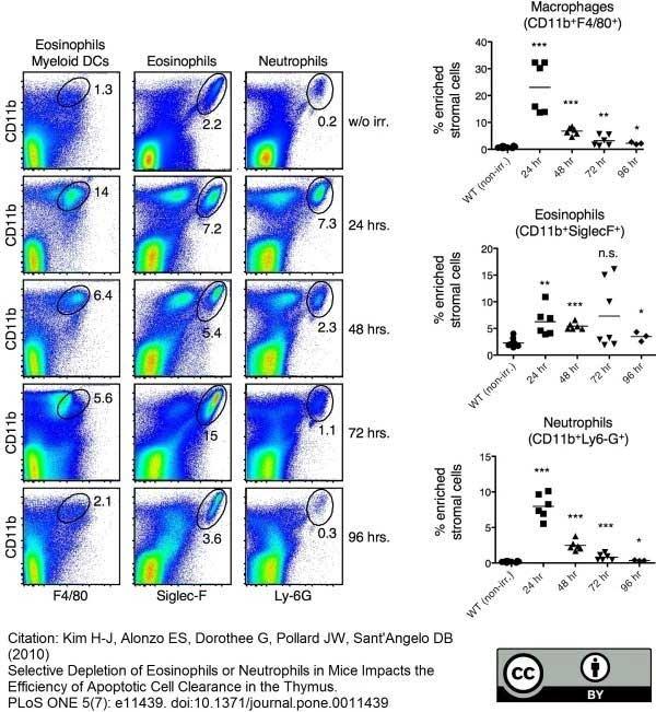 F4/80 Antibody | Cl:A3-1 gallery image 16
