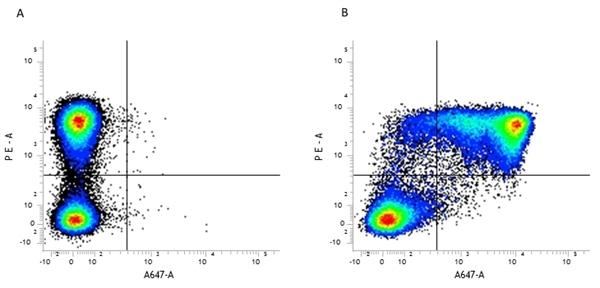 Gr-1 Antibody | RB6-8C5 gallery image 4