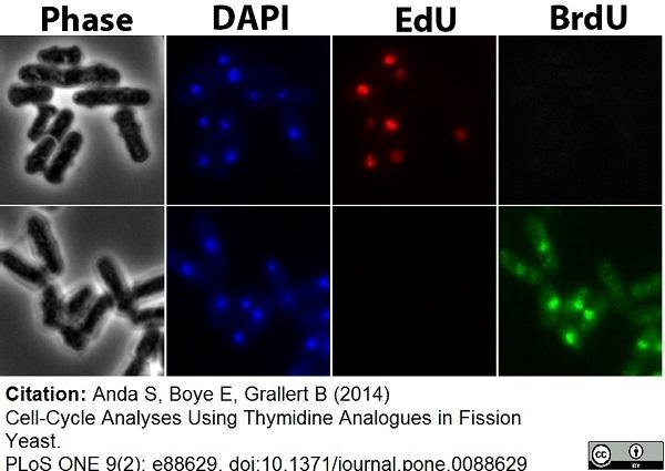 IgG1 Antibody gallery image 12