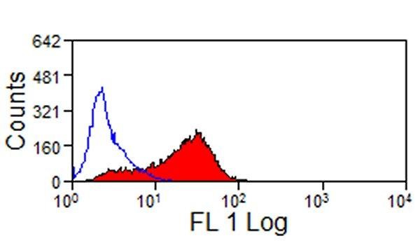 JAM-C Antibody   CRAM-19 H36 gallery image 1