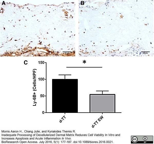 Ly-6B.2 Alloantigen Antibody | 7/4 gallery image 35