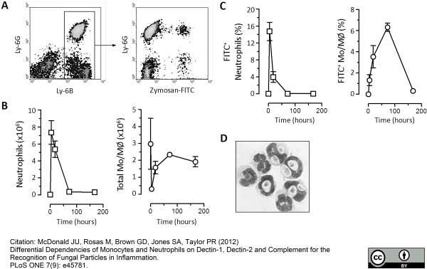 Ly-6B.2 Alloantigen Antibody | 7/4 gallery image 14
