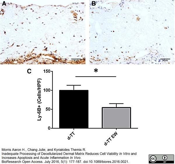 Ly-6B.2 Alloantigen Antibody | 7/4 gallery image 4
