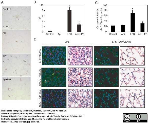 Ly-6B.2 Alloantigen Antibody | 7/4 gallery image 30