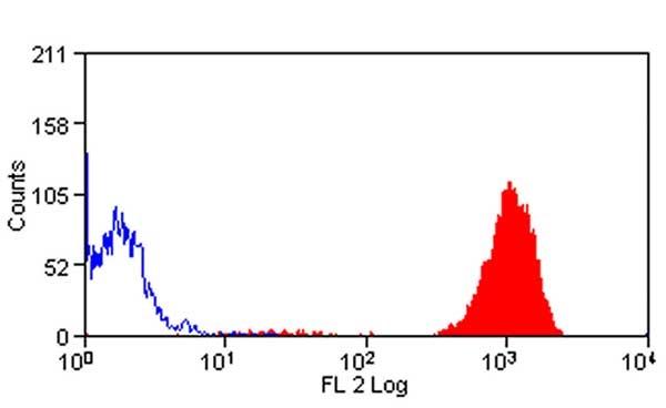 Ly-6B.2 Alloantigen Antibody   7/4 gallery image 5
