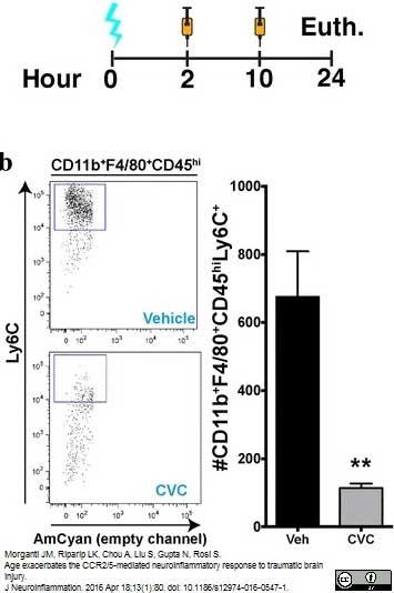 Ly-6C Antibody | ER-MP20 gallery image 8
