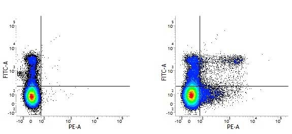 Ly-6C Antibody | ER-MP20 gallery image 3