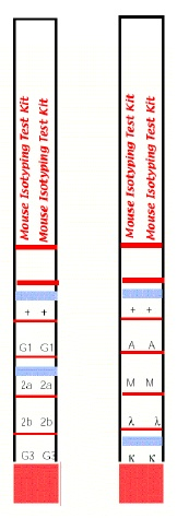 Mouse Isotyping Kit gallery image 1
