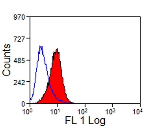 TIM-1 Antibody | RMT1-10 gallery image 2