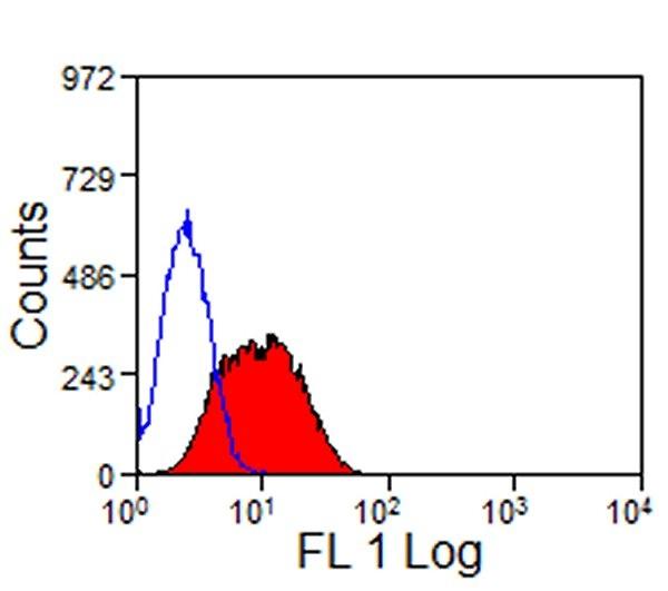 TIM-3 Antibody | RMT3-23 gallery image 1