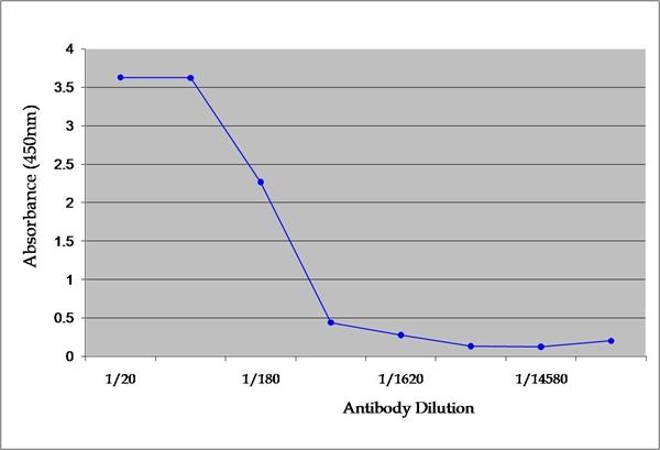 TNF Alpha Antibody | MP6-XT22 gallery image 1