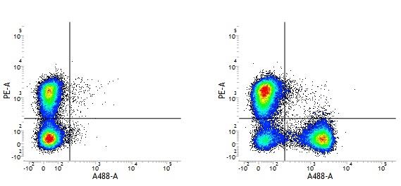 Armenian Hamster IgG Negative Control Antibody gallery image 1