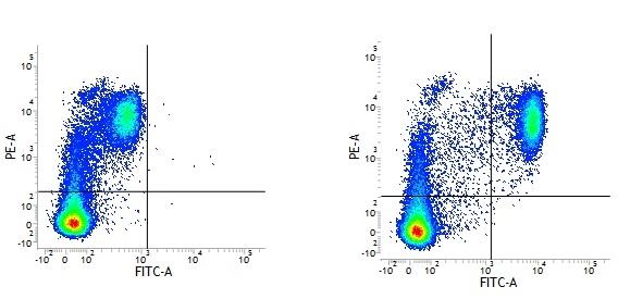 Mouse IgG2a Negative Control Antibody thumbnail image 2